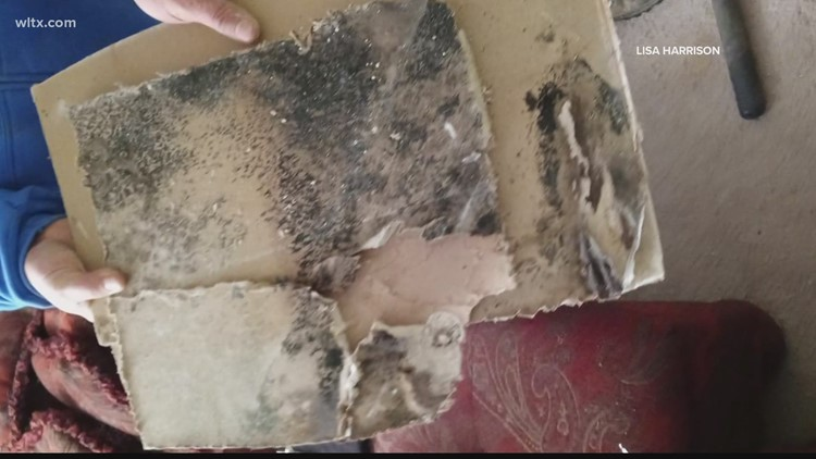 Local family says they  were forced to move out of apartment due to black mold