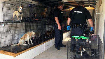 Police seize more than two dozen dogs in animal abuse investigation