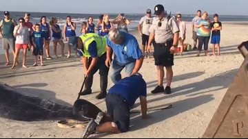 Two whales dead after 20 pilot whales beach themselves at St. Simons Island