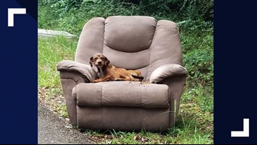 Puppy left abandoned with armchair on side of road