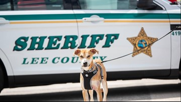 Dog found with its mouth taped shut is now a K-9 cop