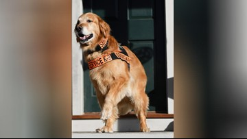 Service dog whose story raised awareness for PTSD has died