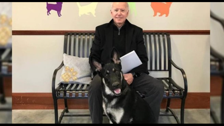 Joe Biden's rescue dog to receive an 'Indoguration' ceremony   Get Uplifted