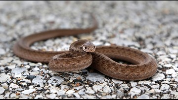 Snake slithers into NC middle school, bites student