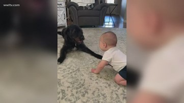 Dog recognizes himself on TV playing with a giggling baby and begins jumping for joy