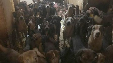 Dogs saved from house fire, deplorable conditions still seeking forever home