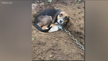 More than 200 dogs and cats rescued from Tennessee home